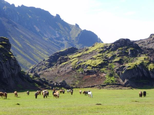 Horse riding vacation in Iceland, 5 days