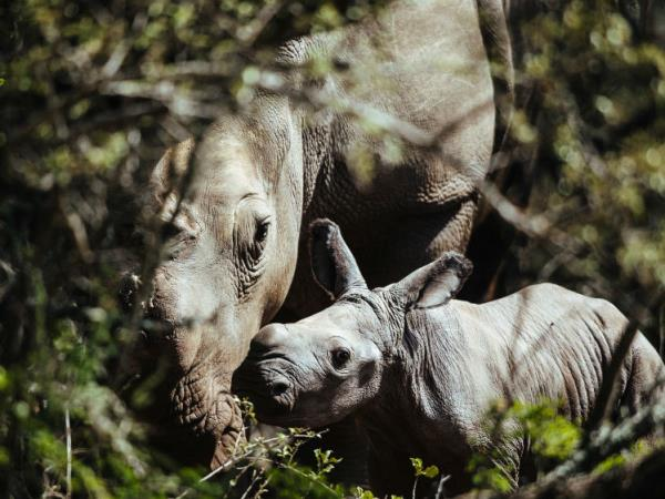 Wildlife conservation in South Africa