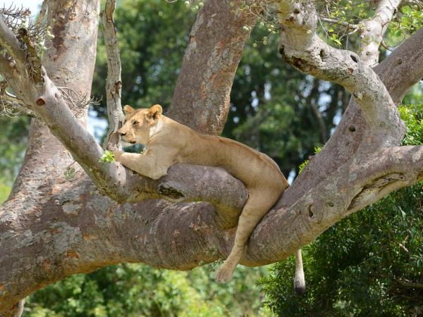 Northern Tanzania private safari vacation