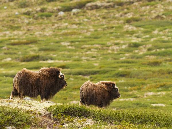 Norway wildlife and wilderness tour
