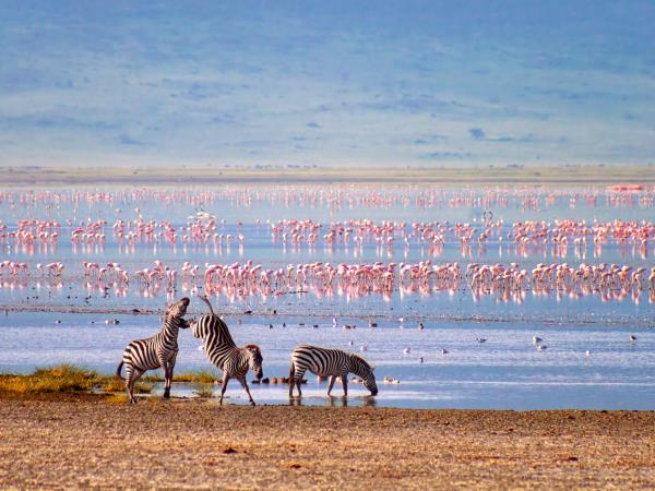 Tanzania vacations, northern circuit & migration safari