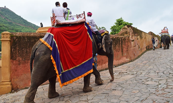 Elephant rides in Rajasthan