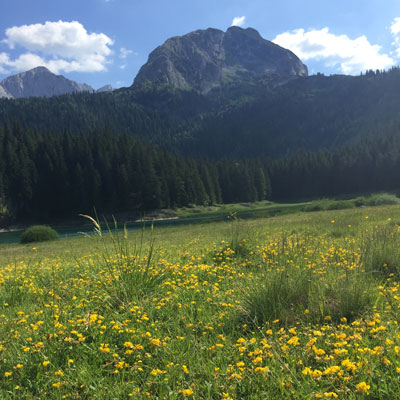 Meadow with yellow flowers