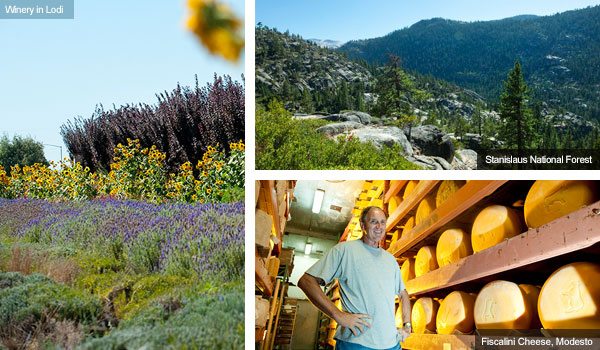 Winery in Lodi, Stanislaus National Forest and Fiscalini Cheese