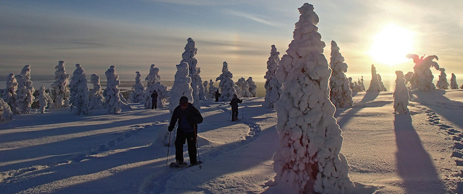 'Tykky' snow-caked trees in  Riisitunturi National Park