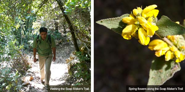 Walking the Soap Makers Trail & Spring flowers, Jordan. Photos by Huw J Williams