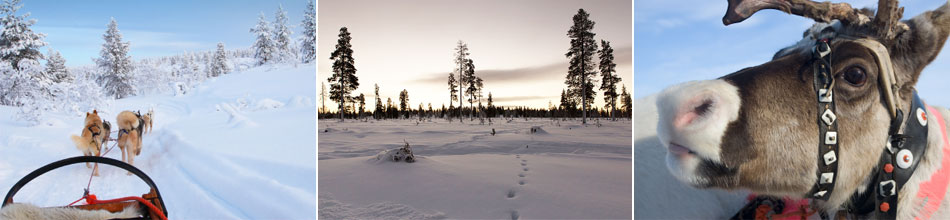 Huskies, Lapland landscape & Reindeer. Landscape photo by Chris