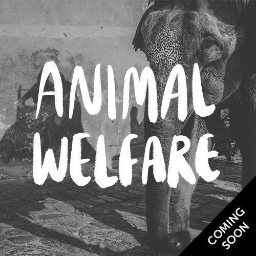 Animal welfare - coming soon