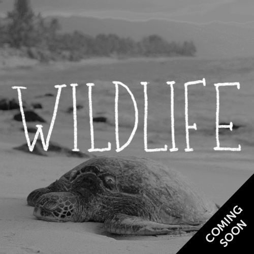Wildlife - coming soon