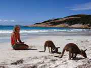 Kangaroos at Lucky Bay, Western Australia. Photo by Tourism Western Australia