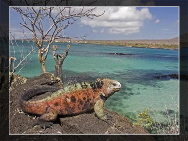 Galapagos family vacation