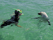 Seal and snorkeller, South Australia. Photo by South Australia Tourist Board