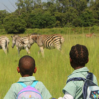 Children watching zebra