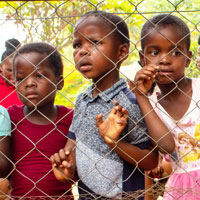 Children looking through the fence at animals