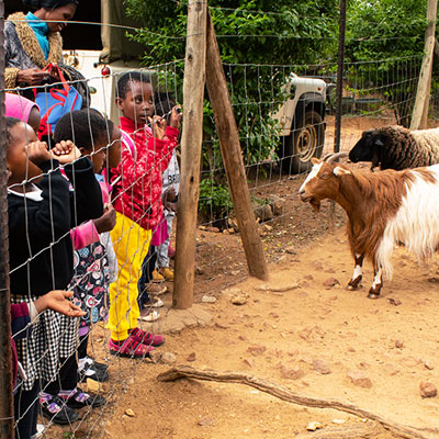 Children watching goat