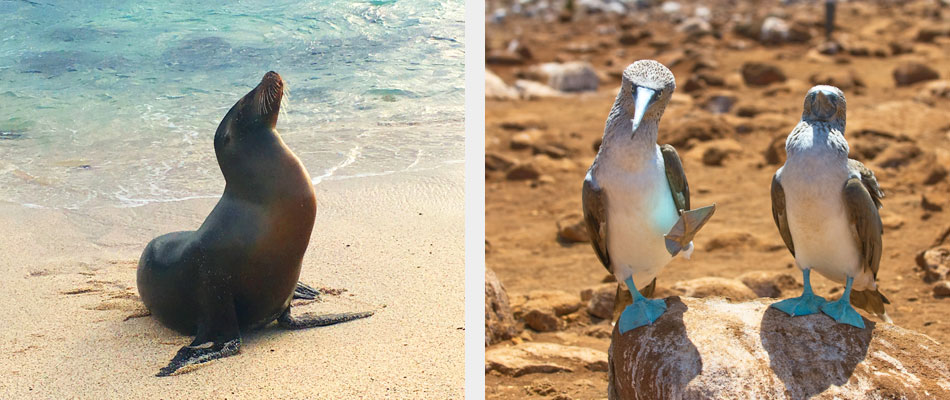 Sea lion and blue footed booby