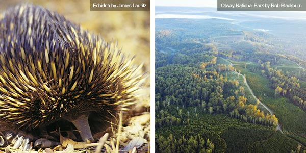 Echidna and aerial view over the Otways, Victoria. Photos from Victoria Tourist Board