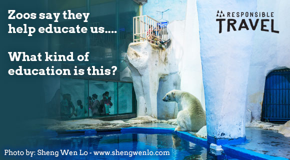 Responsible Travel zoo campaign