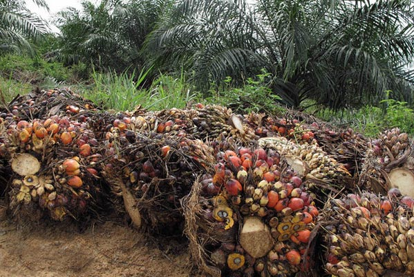 Palm oil by @orajoo