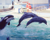 Captive whales & dolphins