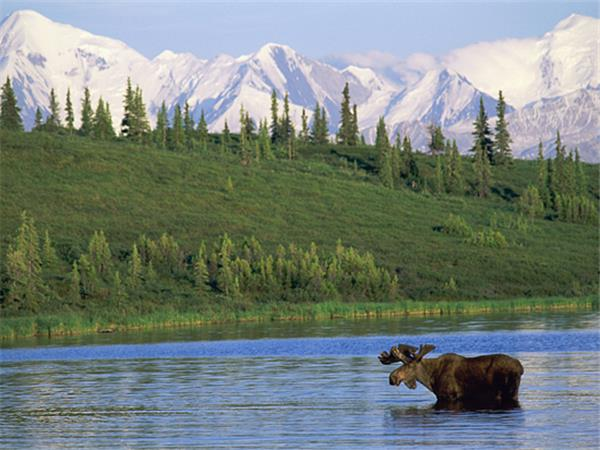 Vacation in Alaska, wildlife and wilderness
