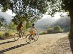 Cycling holiday in California, vineyards & coastal roads