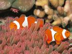 Great Barrier Reef marine studies holiday for school groups, Queensland