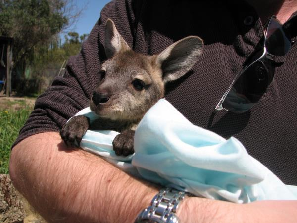 Animal rehabilitation project in Perth, Australia