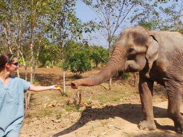 Elephant conservation vacation, Thailand