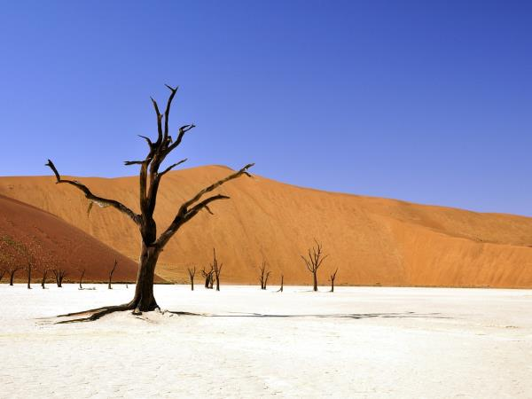 Namibia small group vacation, sand dunes & safari