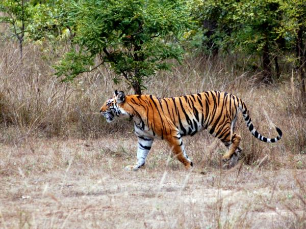 Bhutan tiger safari vacation