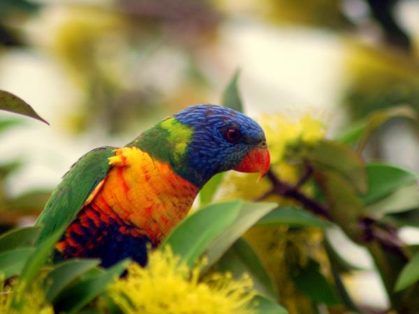 Queensland Rainforests & Great Barrier Reef wildlife holiday