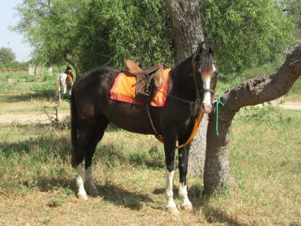 Horse riding vacation in Rajasthan, India