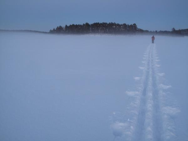 Wolf tracking in Sweden