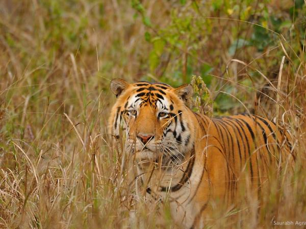 Central India vacation, culture and wildlife