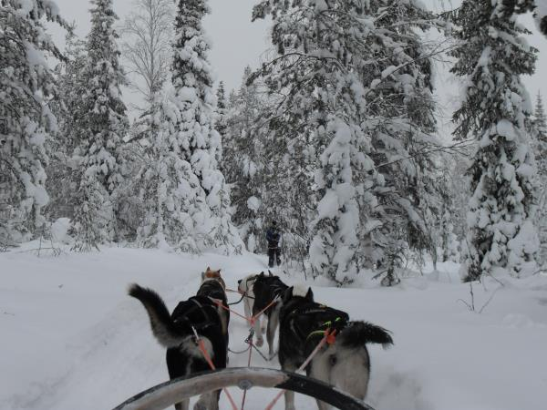 Christmas vacation in Finnish Lapland, with activities