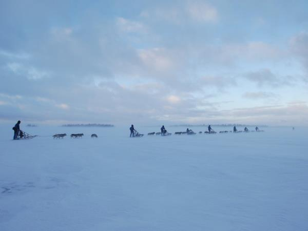 Lapland vacation, husky safari & log cottage