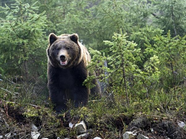 Carpathian Mountains vacation, hiking with bears