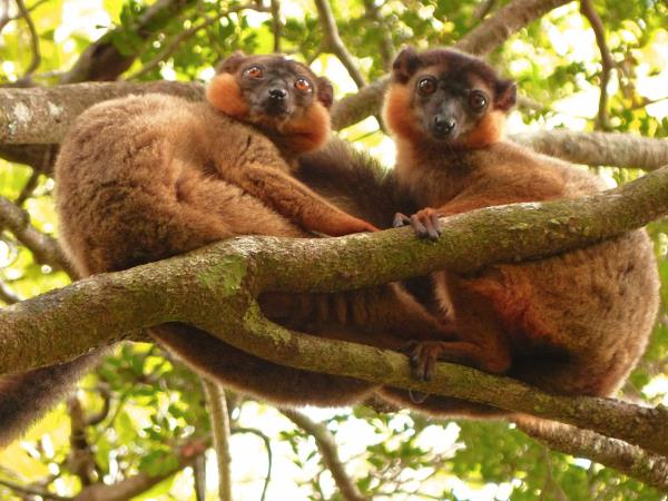 Madagascar conservation volunteering vacation