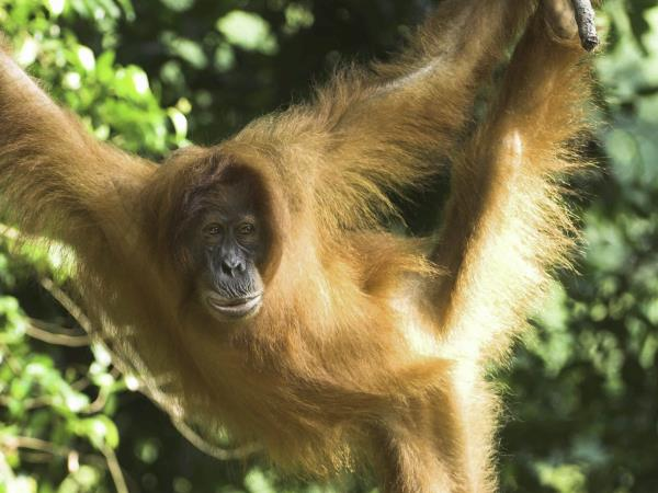 Rainforests, orangutans and beaches in Borneo