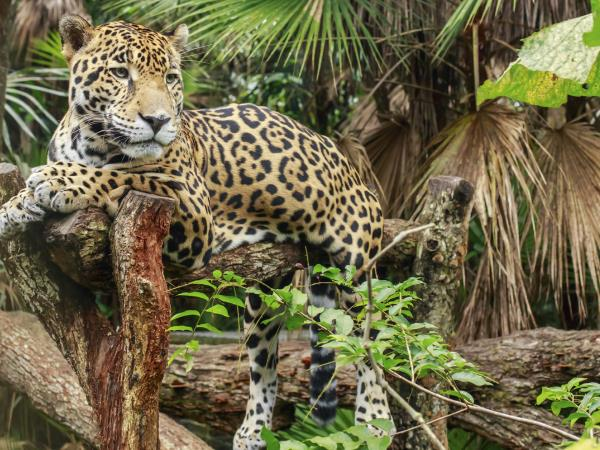 Wildlife luxury adventure in Belize