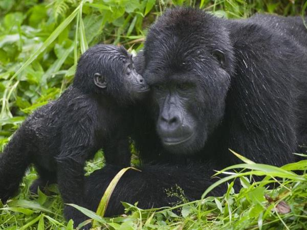 Uganda wildlife vacation