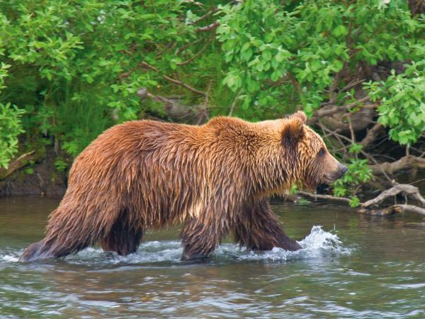 Kamchatka Peninsula wildlife cruise