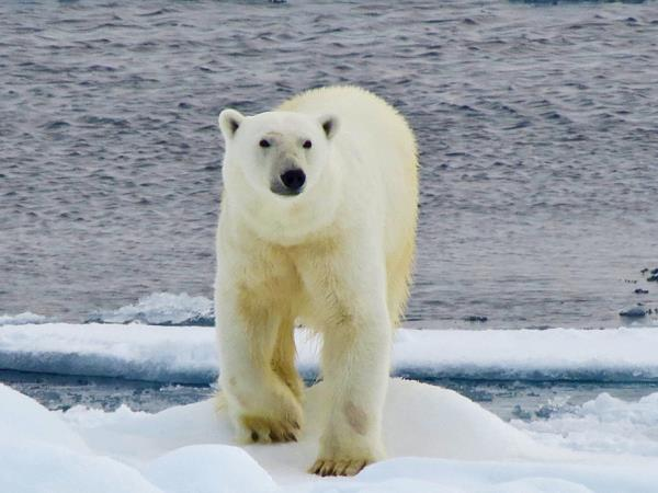 Polar bear cruise in Spitsbergen