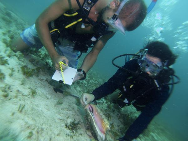 Belize marine conservation internship