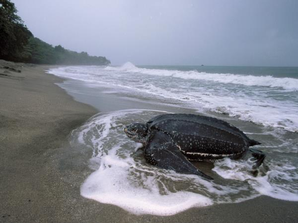 Costa Rica sea turtles conservation vacation