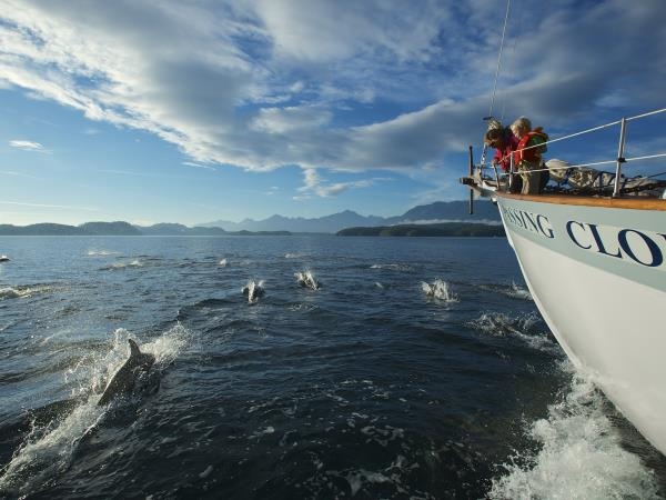 Vancouver Island whale watching tours, Canada