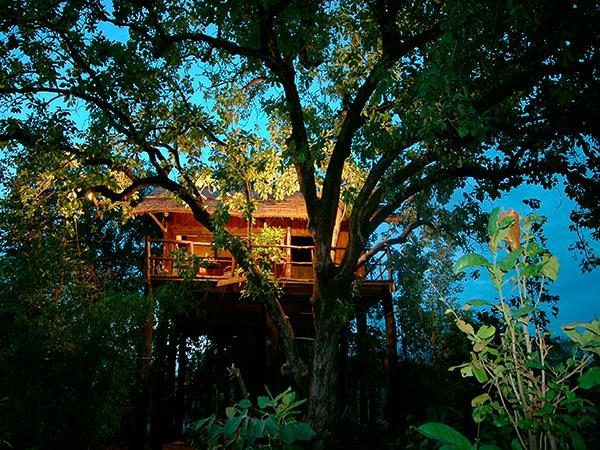Central India wildlife holiday, stay in a treehouse