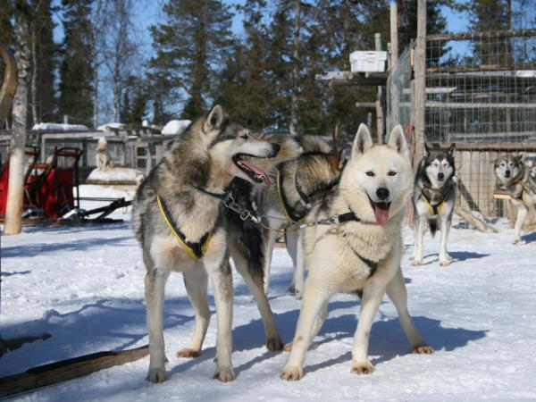 Lapland vacation, Muonio Winter Adventure at Christmas