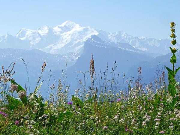 French Alps self guided walking holiday